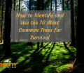 How to identify and use the 10 most common trees for survival