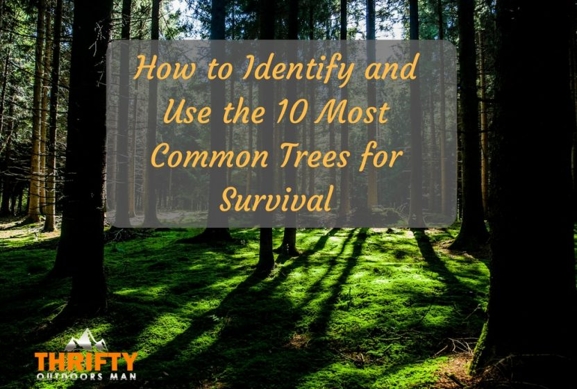 How to identify the 10 Most Common Trees for Survival