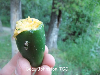 Camp Jalapeno Poppers