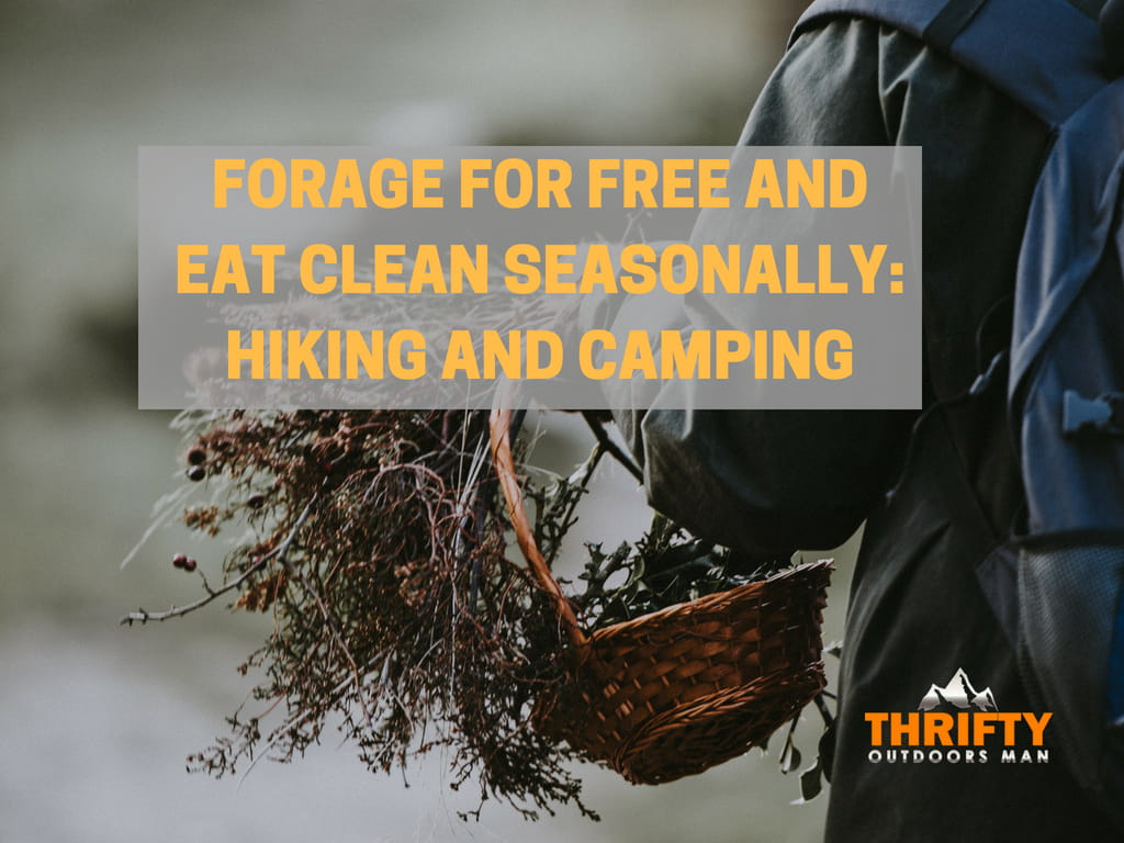 Forage for Free and Eat Clean Seasonally: Hiking and Camping